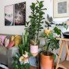 decorar-com-plantas-1815861